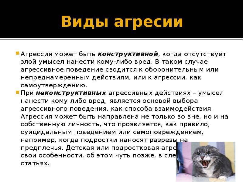 Почему домашние кошки агрессивны и как приручить дикого котенка? объясняет эксперт: новости, животные, собаки, кошки, воспитание, дом, питание, домашние животные