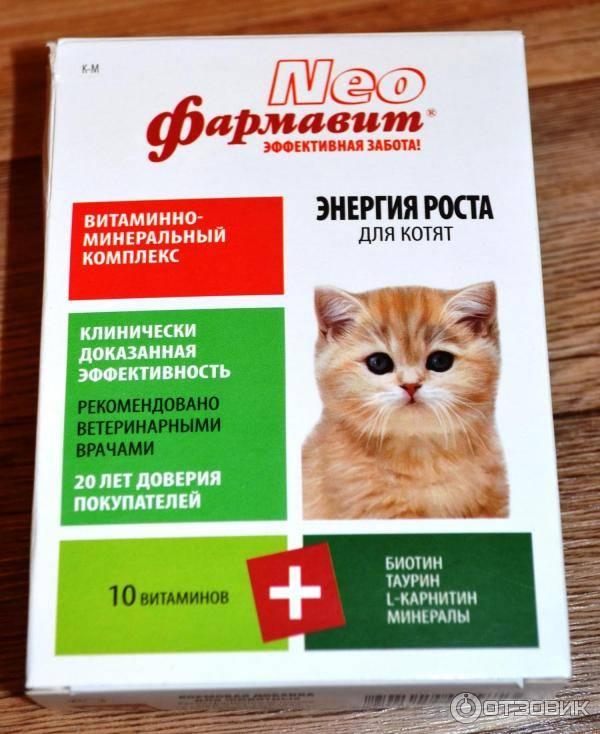 Витамины для кожи и шерсти кошек — топ-6 лучших
