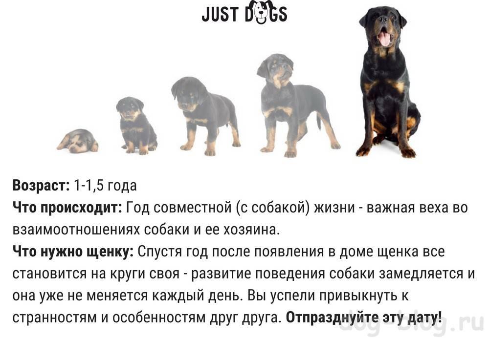 До какого возраста растут собаки — взросление и старость пса