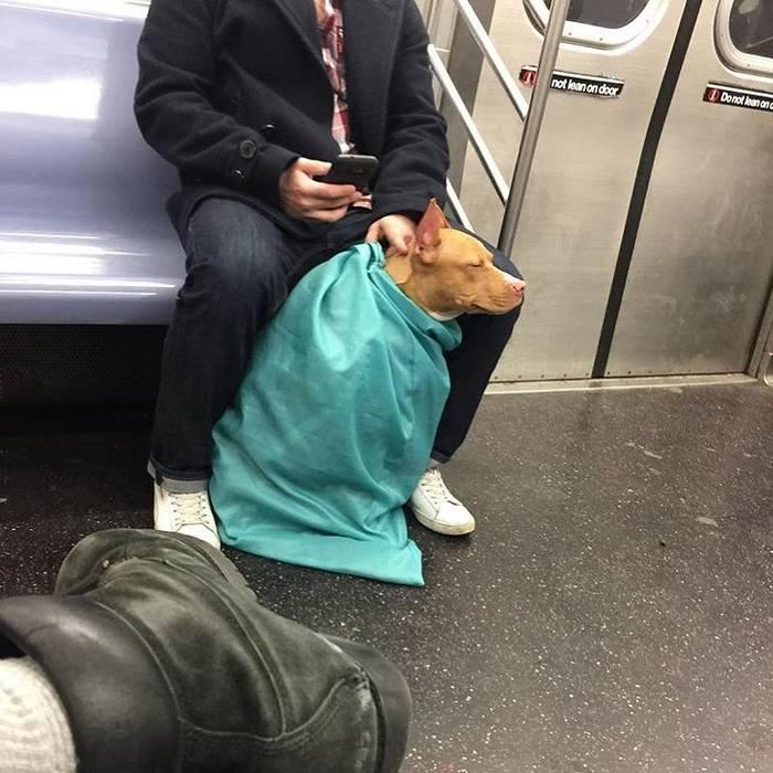 Можно ли с собакой в метро и каковы правила перевозки