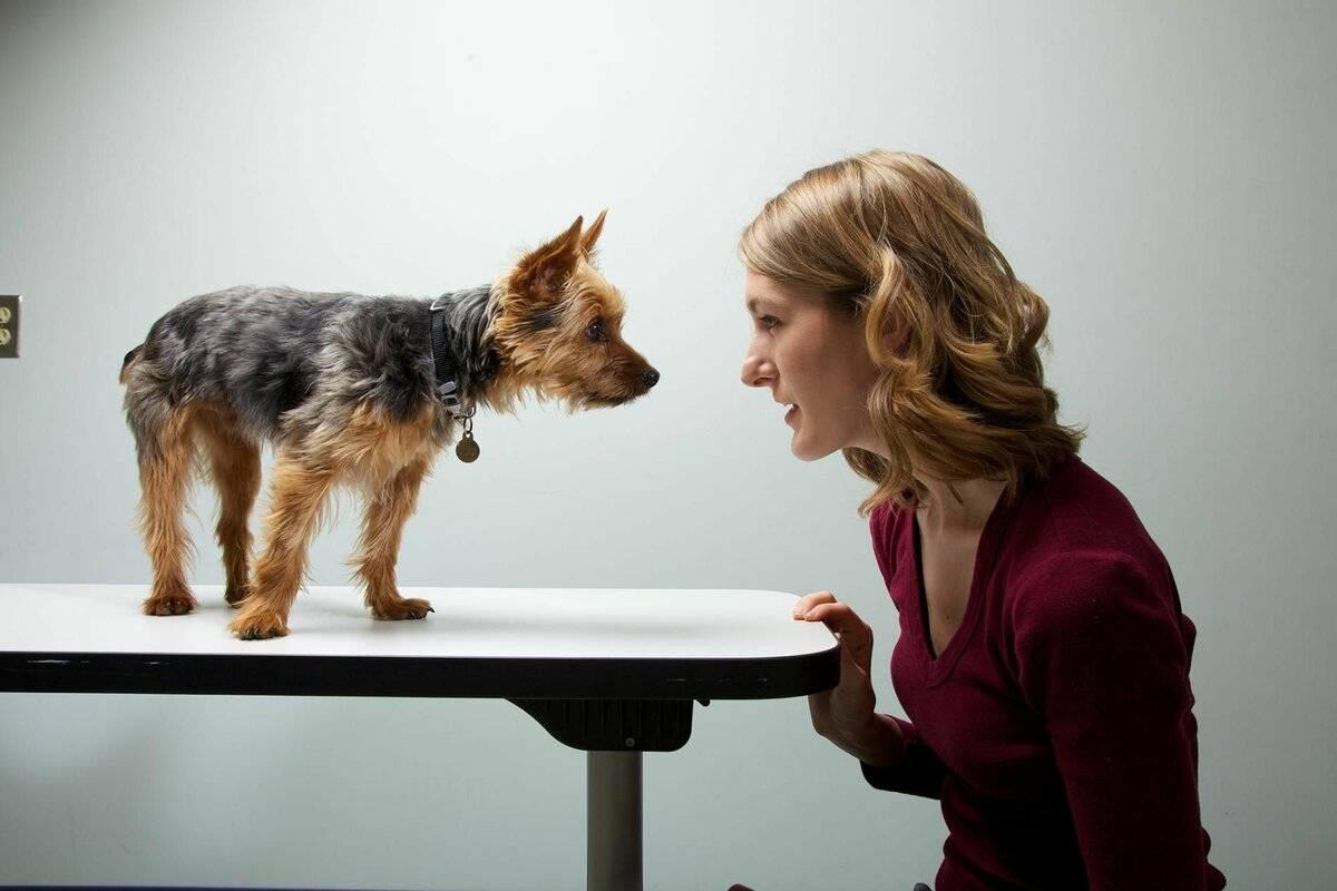Собачий язык: как понять позы и их значение