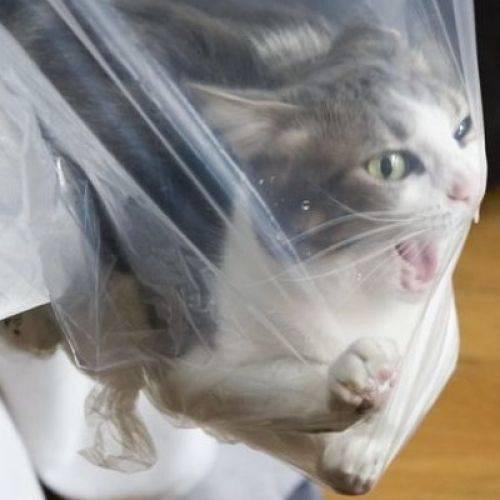Кот съел пакет из целлофана: что делать, последствия