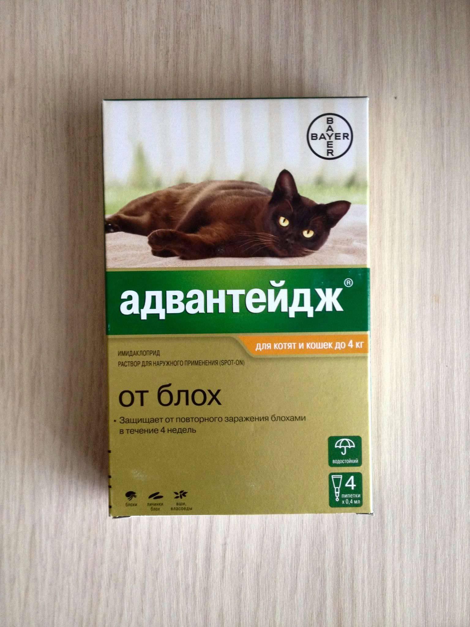 Адвантейдж / advantage (капли) для кошек | отзывы о применении препаратов для животных от ветеринаров и заводчиков