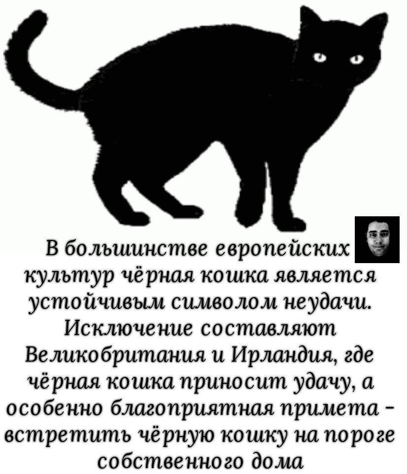 Почему нельзя целовать кошек?