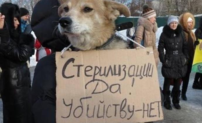 Живодеры или зоозащитники: конкуренция на рынке отлова бездомных собак в вологде растет - новости - gorodvo.ru