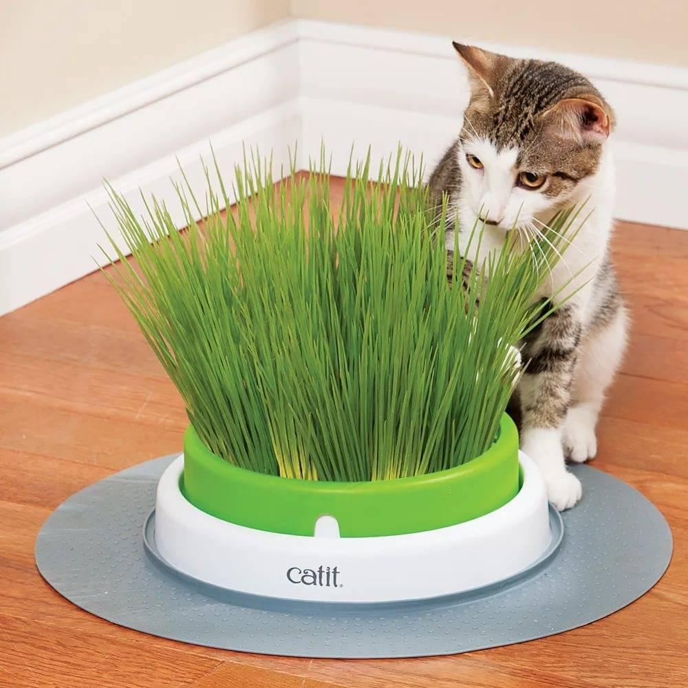 Трава для кошек: виды, польза, как вырастить ее в домашних условиях, какую лучше выбрать, как отучить животное есть другие растения
