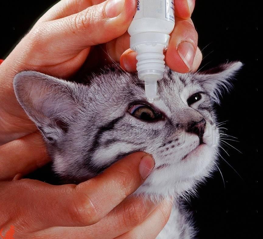 Как лечить аллергию у кошек в домашних условиях