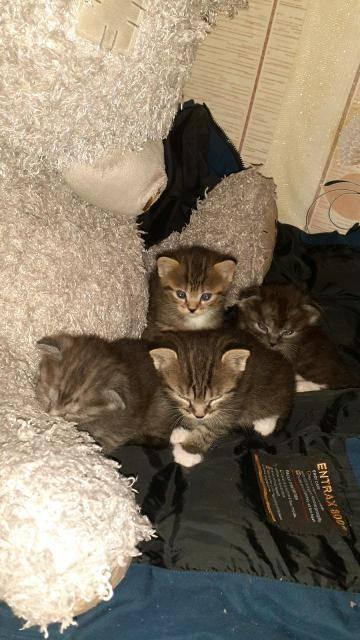 Как выбрать котенка для дома правильно?