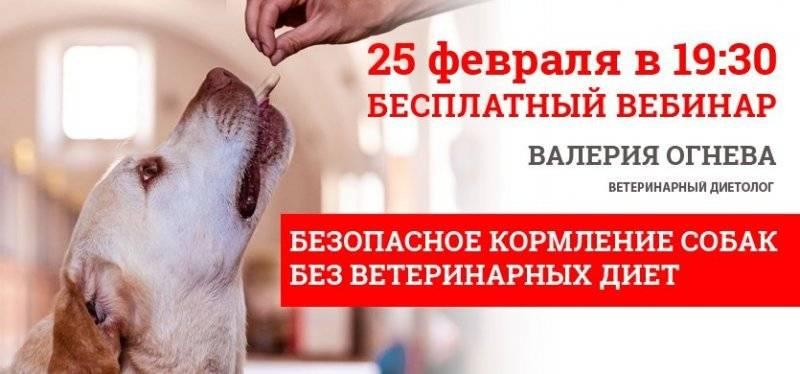 9 главных ошибок при кормлении собаки - gafki.ru