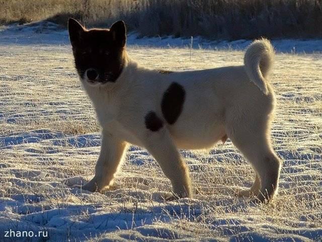 Породы лысых (голых) собак: названия, описание и фото