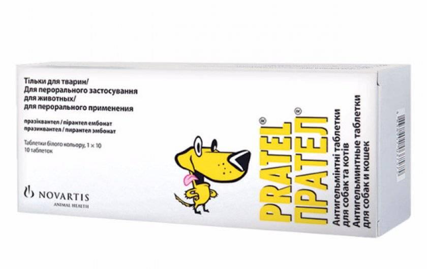 Как правильно давать «прател» собакам от глистов