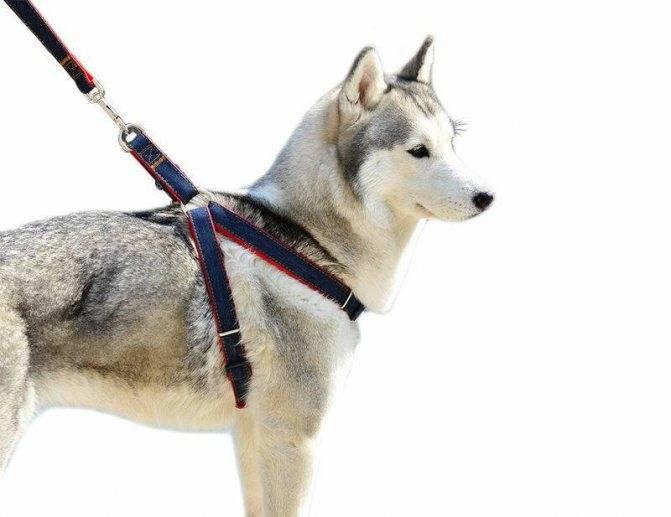 Как выбрать поводок для собак и что лучше рулетка, ринговка или удавка