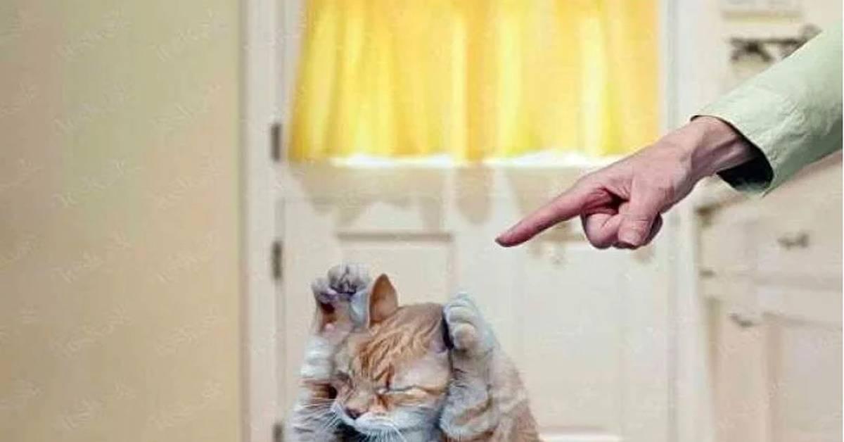 Как наказывать кошку за плохое поведение: как отругать кота?