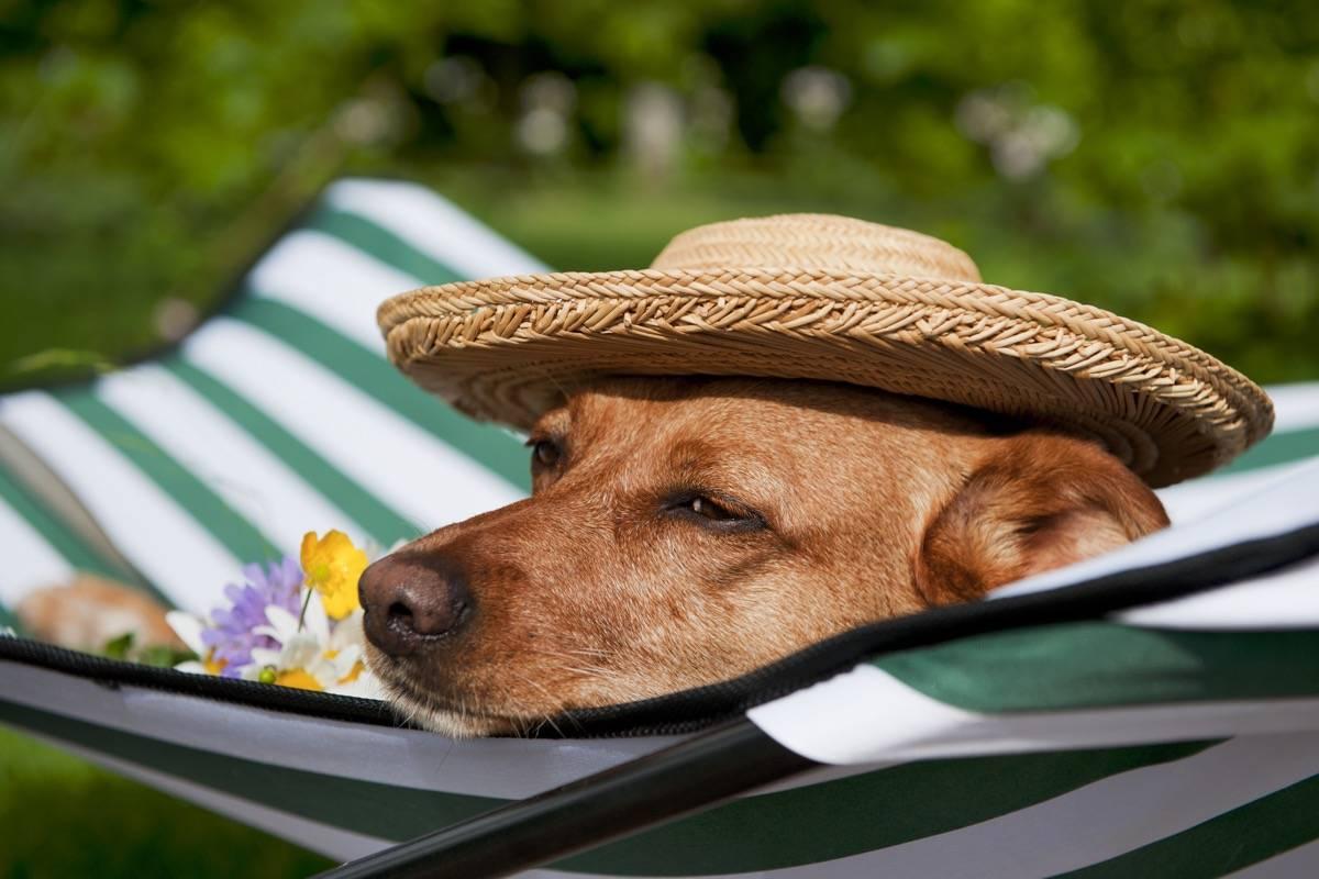 Где оставить питомца на время отпуска? – блог купибилет