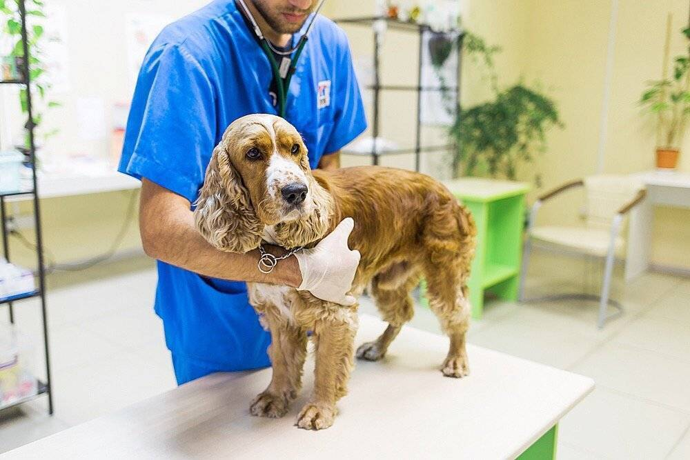 Часто задаваемые вопросы ветеринарам