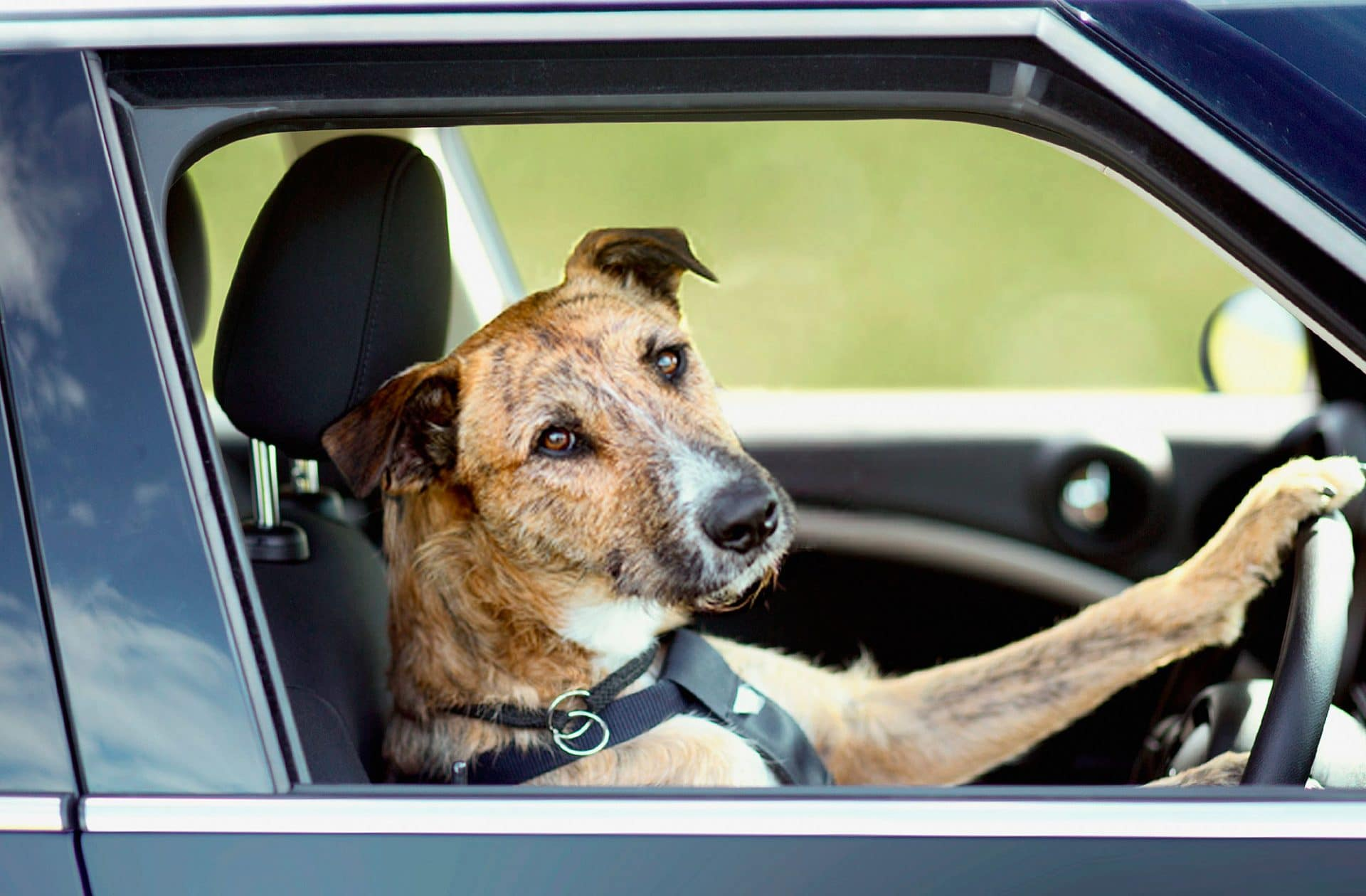 Собака и транспорт. как приучить собаку к общественному транспорту, как перевозить?