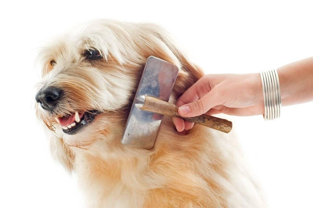 Как вычесывать собаку: пошаговая инструкция и советы опытных заводчиков (110 фото и видео)