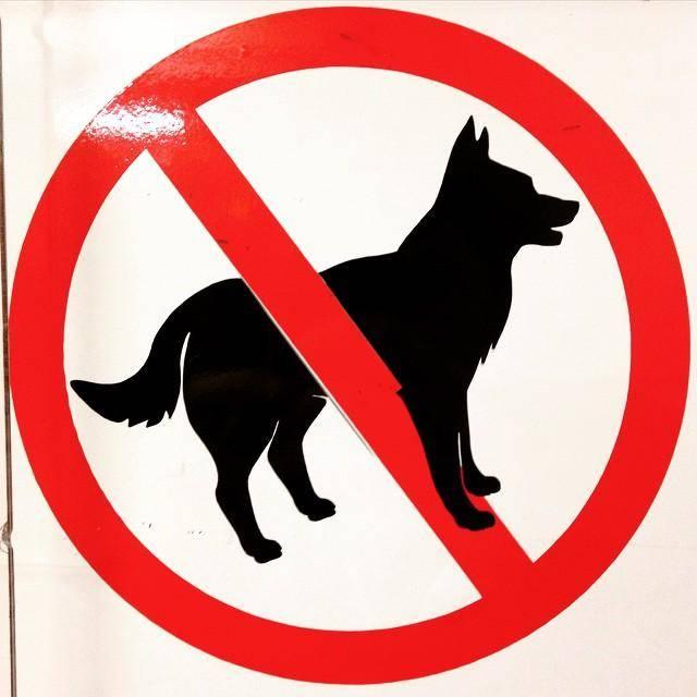 Куда не запрещено заходить с собакой с точки зрения закона. ридус