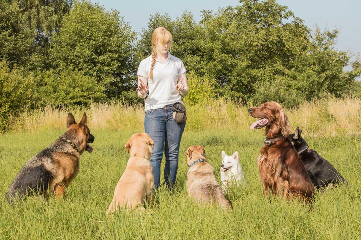 Приемы установления лидерства в отношениях с собакой - мастер пёс