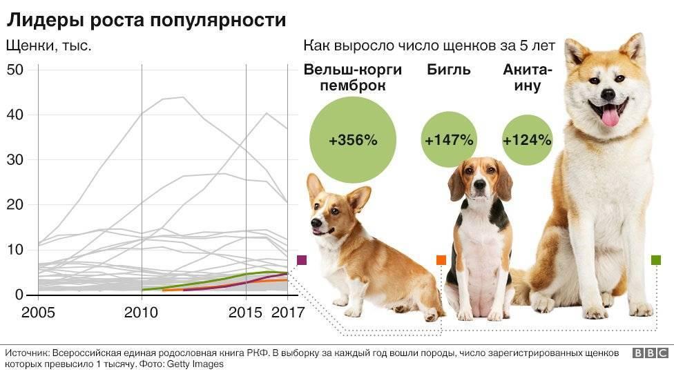 Какая порода собак самая дорогая?