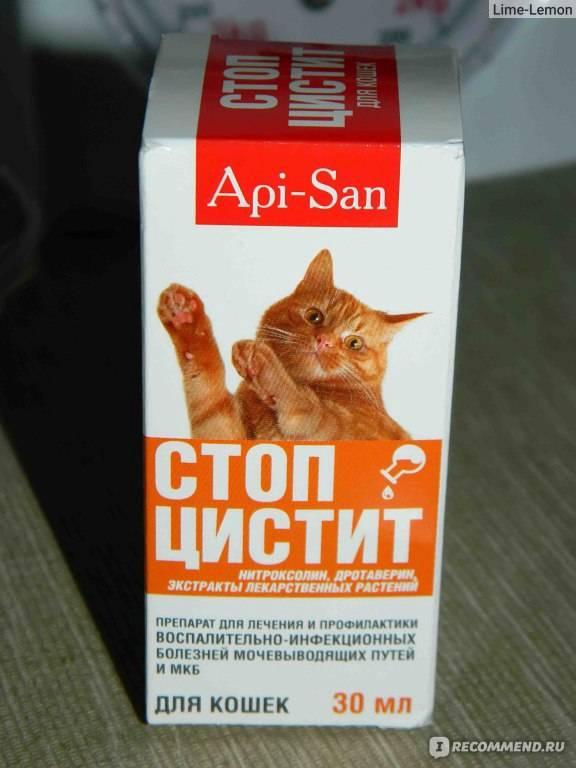 Идиопатический цистит кошек. обследование и лечение в россии