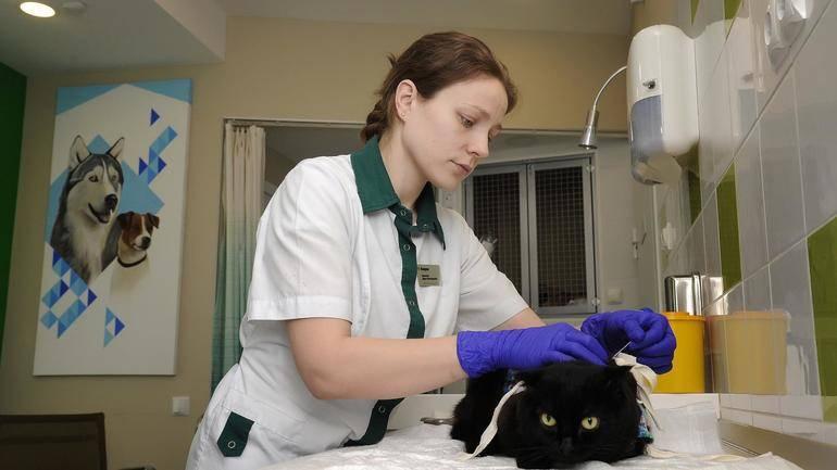 Откровения ветеринаров. как нас обманывают при лечении домашних питомцев | животные | общество | аиф челябинск