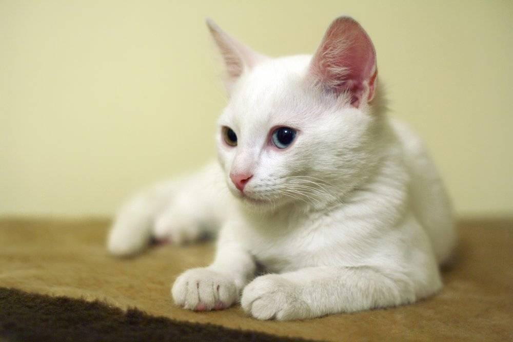 Клички для котов (500+ имен)