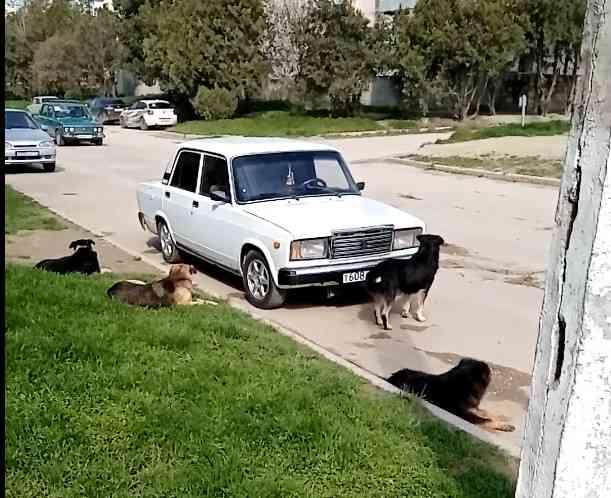 Налог на домашних животных в россии 2021: будет ли введен закон о налоге на содержание питомцев? последствия законопроекта