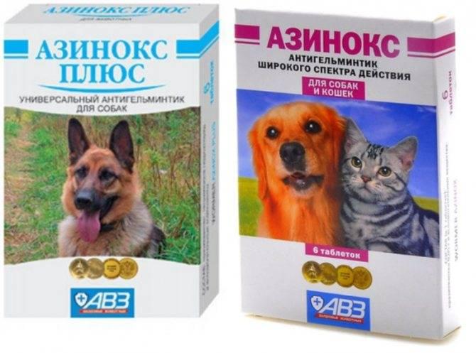Азинокс плюс для собак: инструкция по применению, цена, отзывы