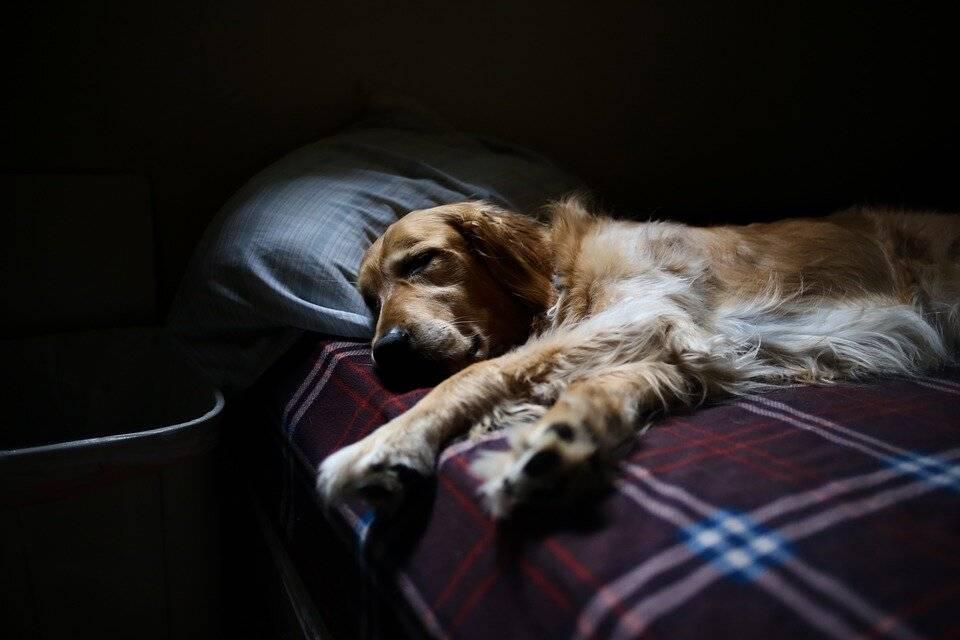 Как приучить собаку спать на улице. как приучить щенка ночью спать