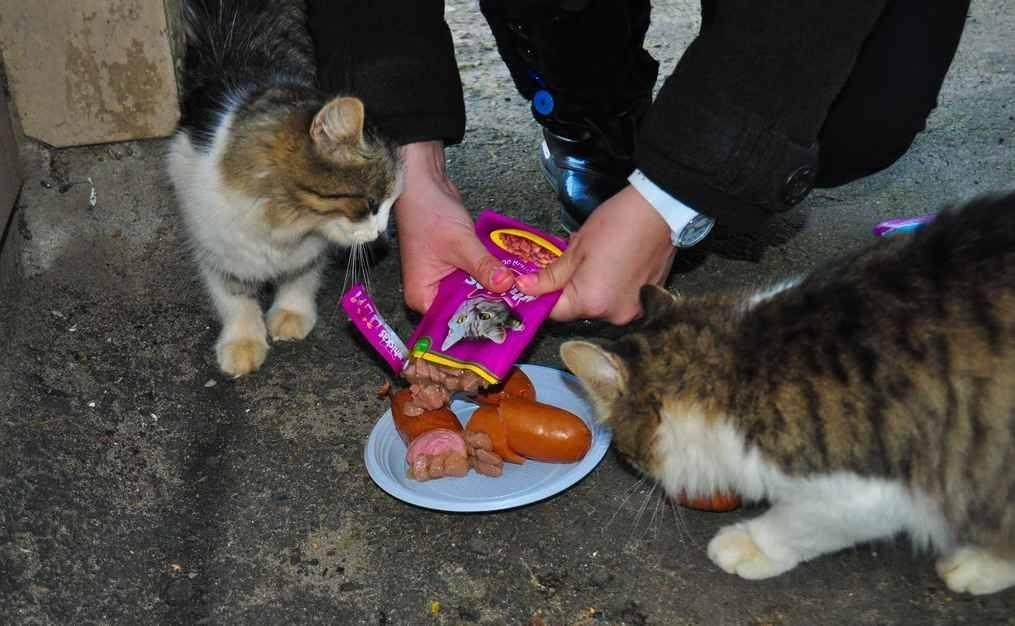 Почему кошка не ест? возможные причины и последствия.