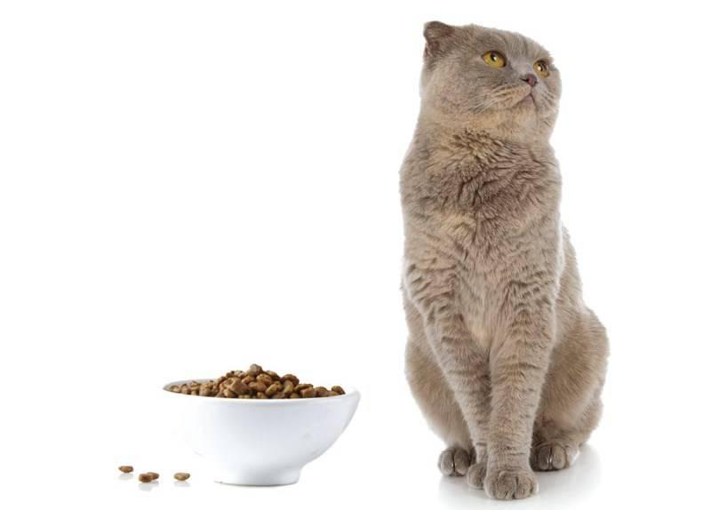 Почему кошка много пьет?