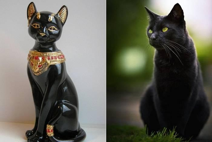 Кошка-талисман по знаку зодиака: выбираем любимца правильно