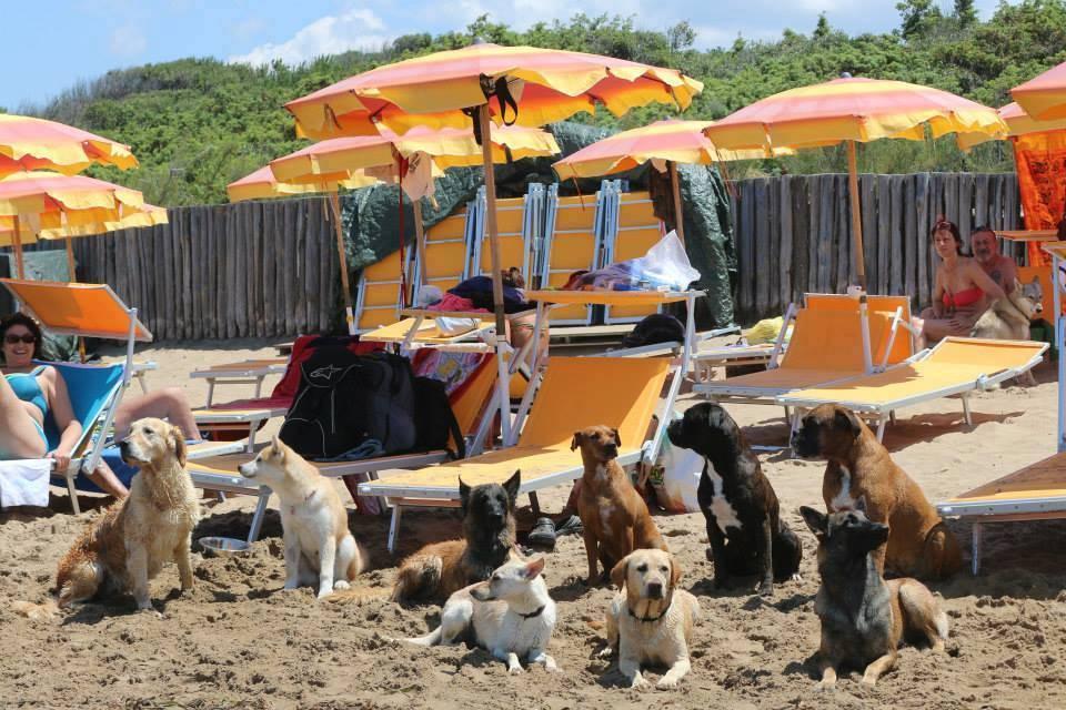 Отдых с собаками на море: куда поехать, советы, отзывы
