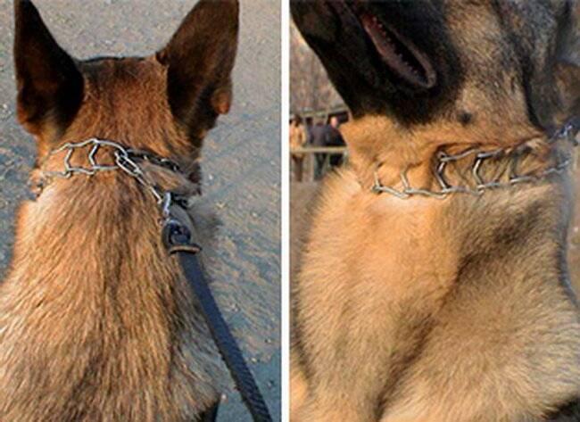 Строгий ошейник для собак: как пользоваться и как сделать обычный ошейник своими руками
