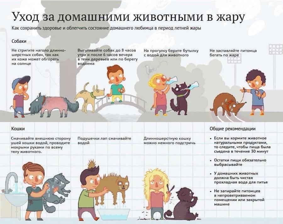 Как помочь собаке в жару: что делать, как помочь питомцу если в квартире нет кондиционера, способы охлаждения животного если нет прохладного места
