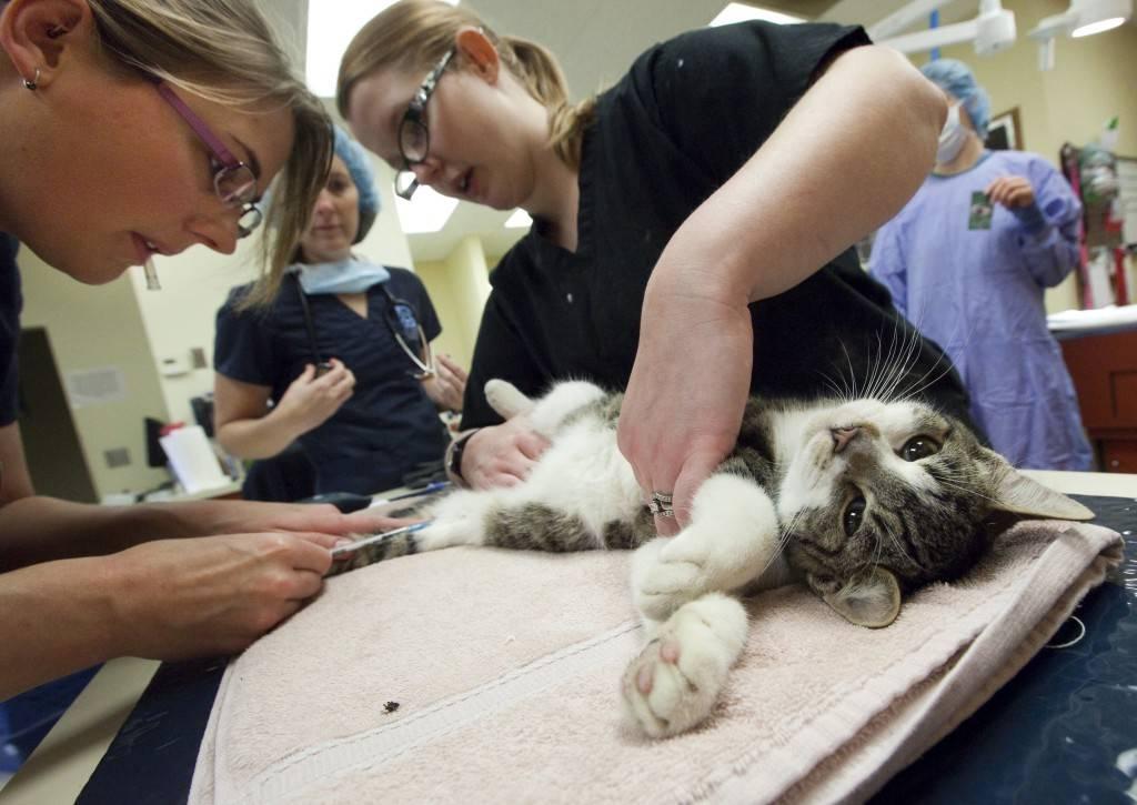 Ветеринарные услуги: усыпление животных – ветеринарные клиники ушихвост, полный спектр услуг для животных.