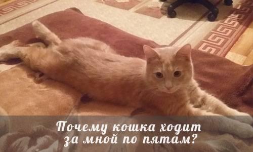 Почему коты ходят постоянно за хозяином
