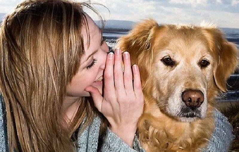 Понимают ли собаки человеческую речь: неопровержимые фаты и доказательства