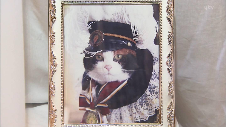 Можно ли самим хоронить кота. где и как правильно похоронить кошку (деликатная тема). городские или сельские условия - лечение