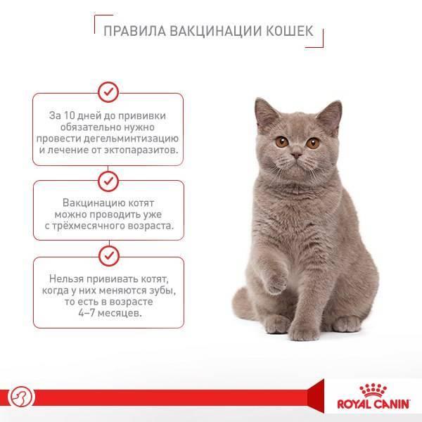 Советы ветеринара: как оставить кошку одну дома на несколько дней без вреда здоровью | животный мир