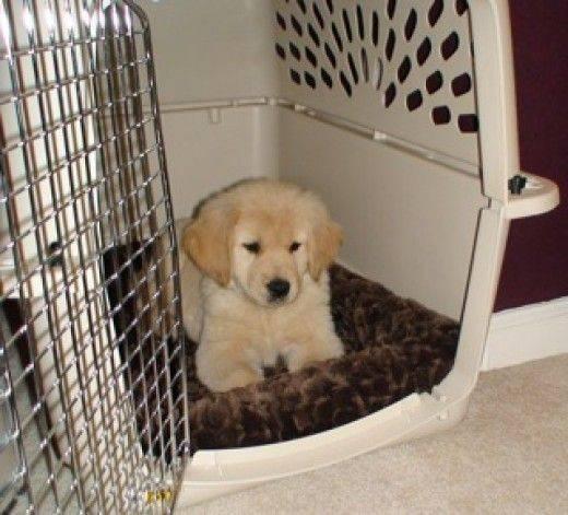 Секреты приучения щенка ходить на пеленку: как правильно сформировать навык