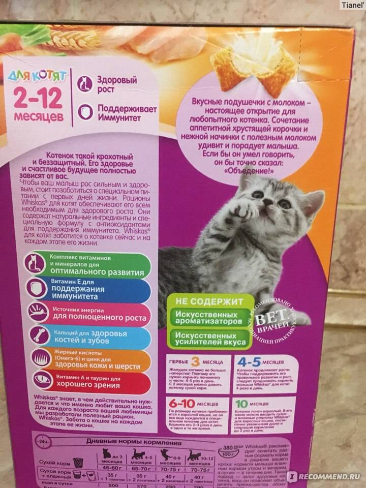Как выкормить котенка без кошки в домашних условиях — средства и процесс