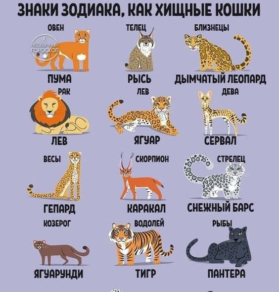 Какое вы животное по знаку зодиака?
