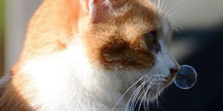 Почему чихают коты: при каких заболевания, что делать дома, когда обращаться в клинику?
