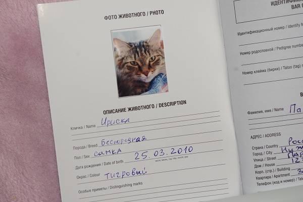 Путешествуем сбарсиком: как оформить международный ветеринарный паспорт