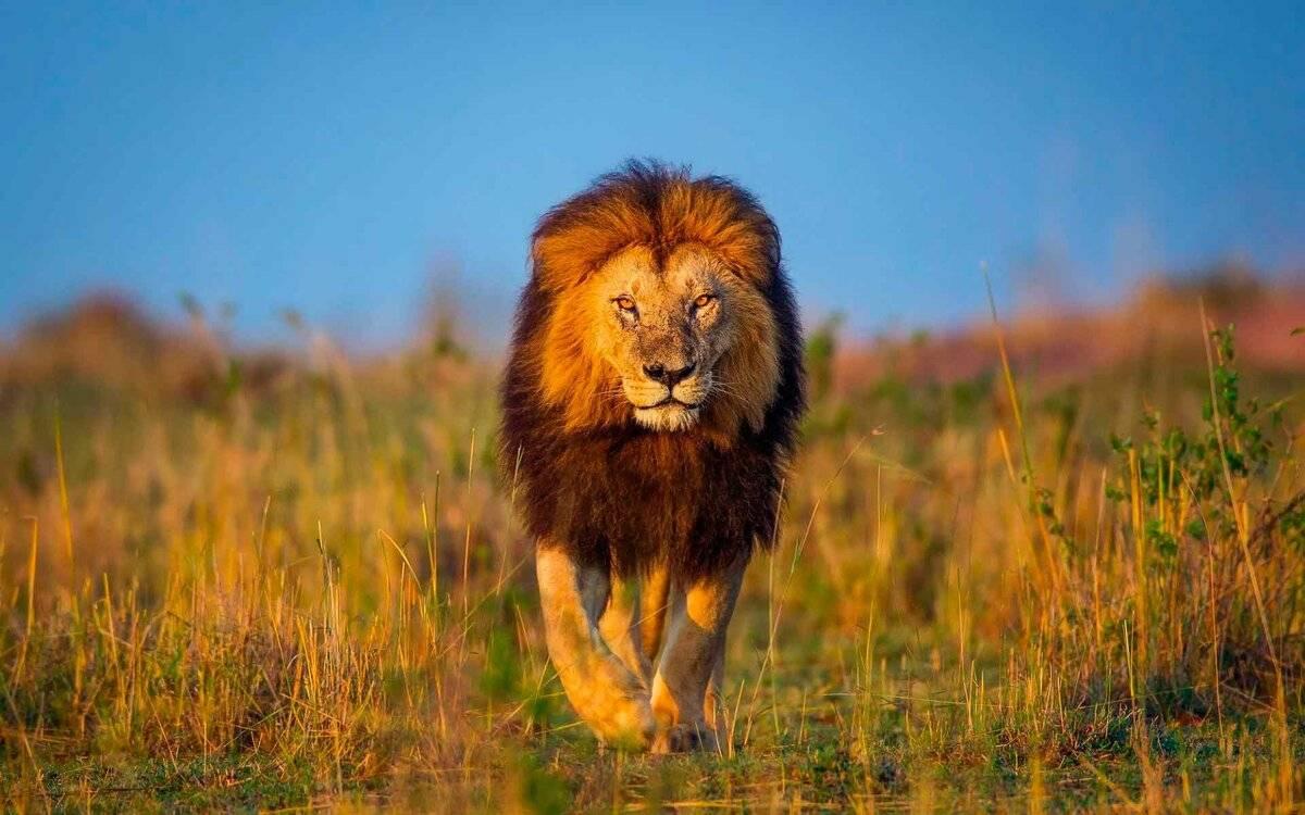 Топ-10 самых опасных животных в мире: интересные факты, фото, видео