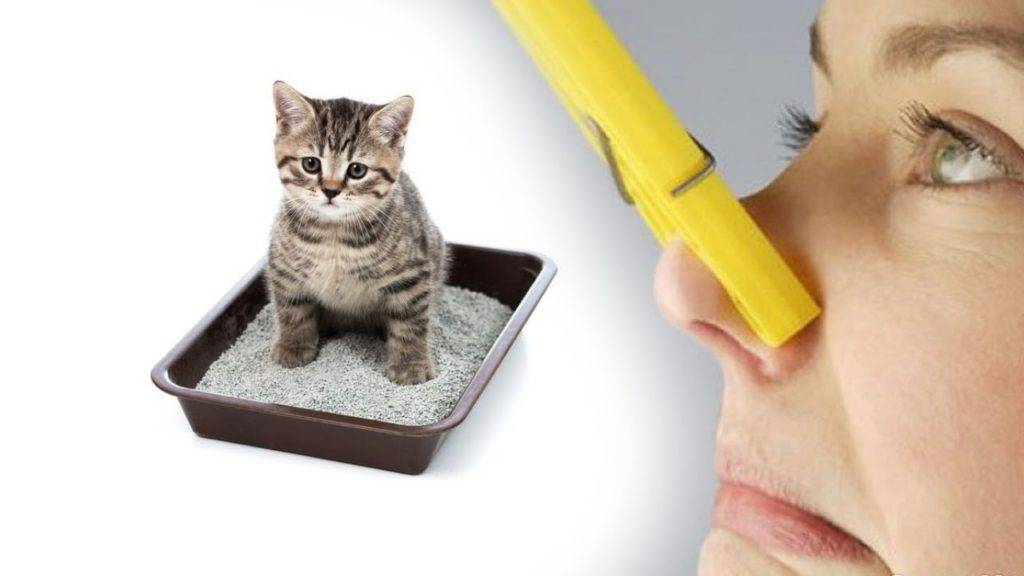 5 причин, почему кошка спит с человеком и о чем это говорит: новости, кошки, здоровье, дом, животные, домашние животные