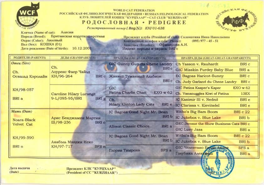 Как определить породу кошки: основные критерии, зачем нужно