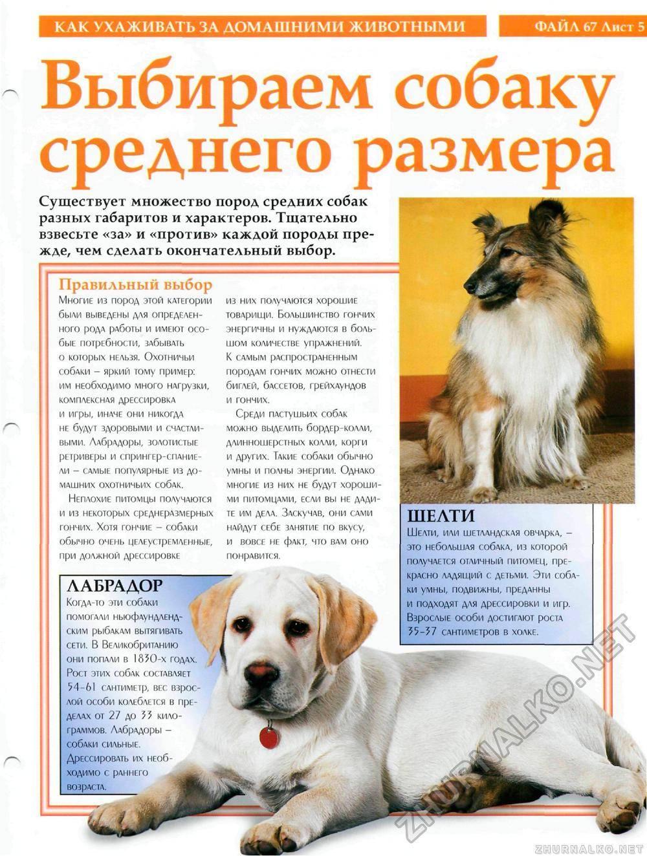 Анатолийская овчарка собака. описание, особенности, уход и цена породы | sobakagav.ru